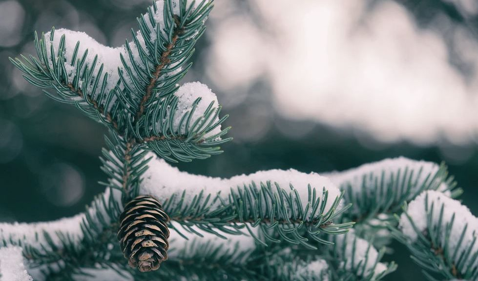 plante hiver