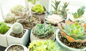 plantes en intérieur pendant l'hiver